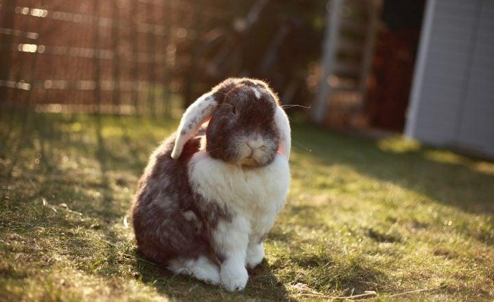 snacks voor konijnen maken