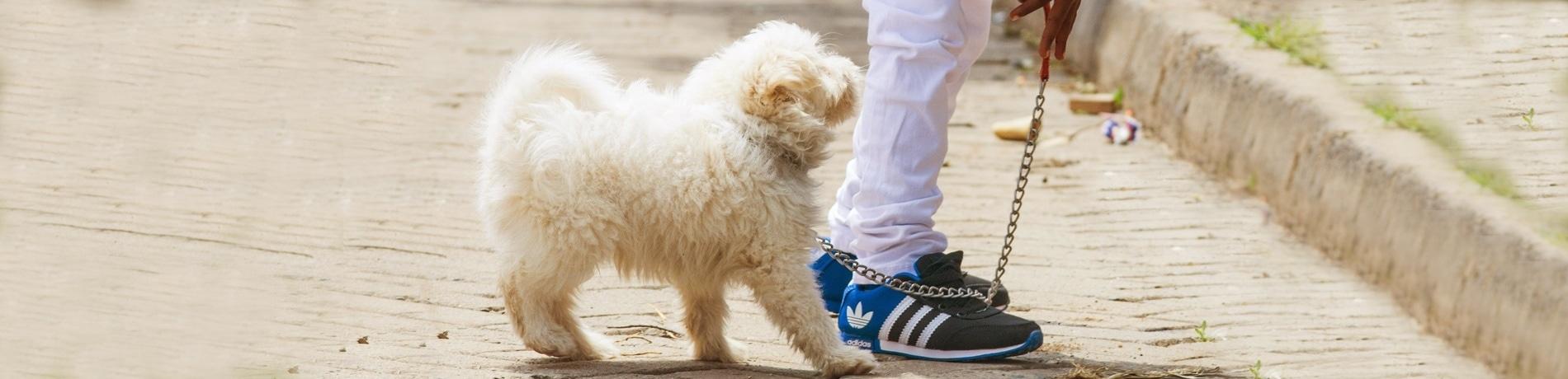 Puppy uitlaten