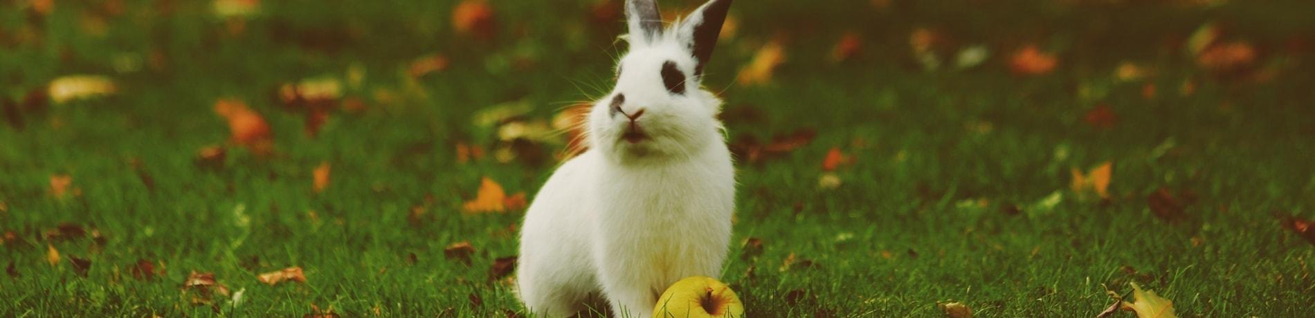Wat mogen konijnen eten
