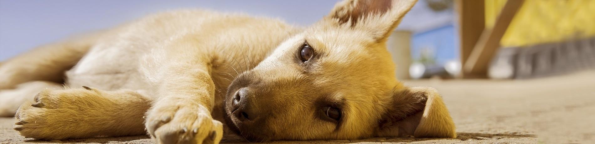puppy en kinderen