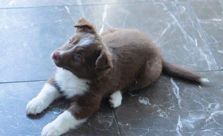 puppy controle dierenarts