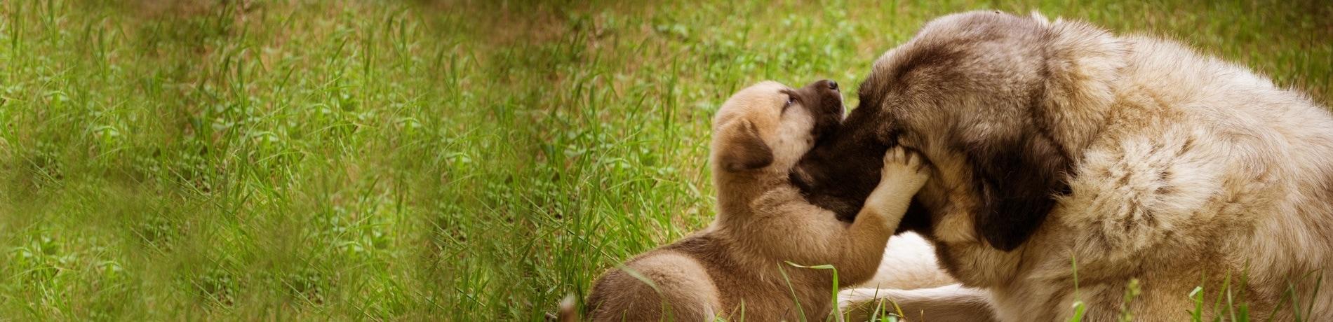 welke pup kiezen uit het nest