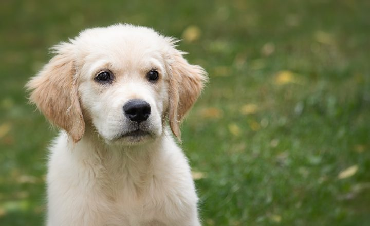 18 redenen om je hond wel of niet te verzekeren