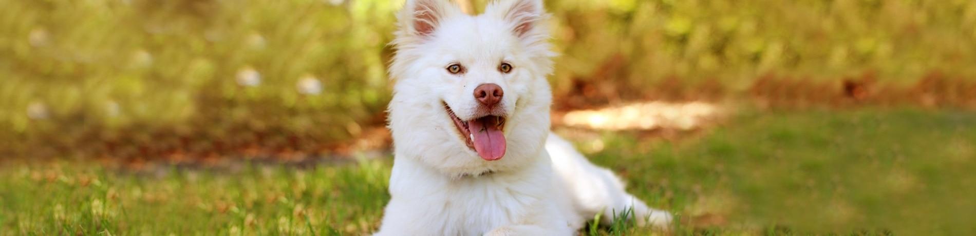 6 mythes over hondenverzekering