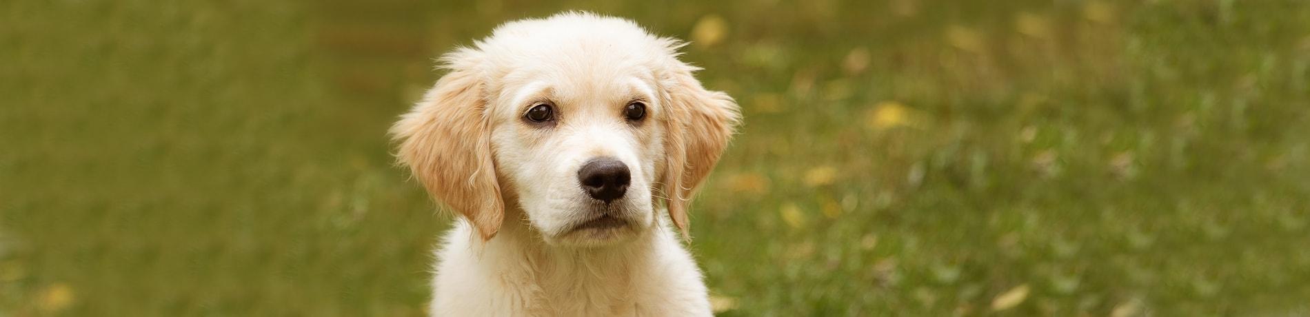 20 redenen om je hond te verzekeren