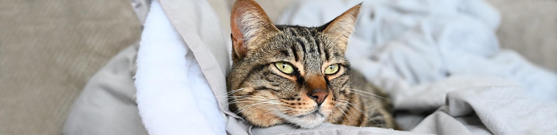 kan een kat tegen vrieskou