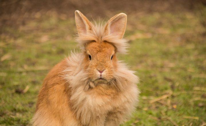 wintervacht konijn