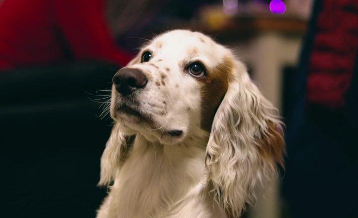 Goede voornemens huisdier