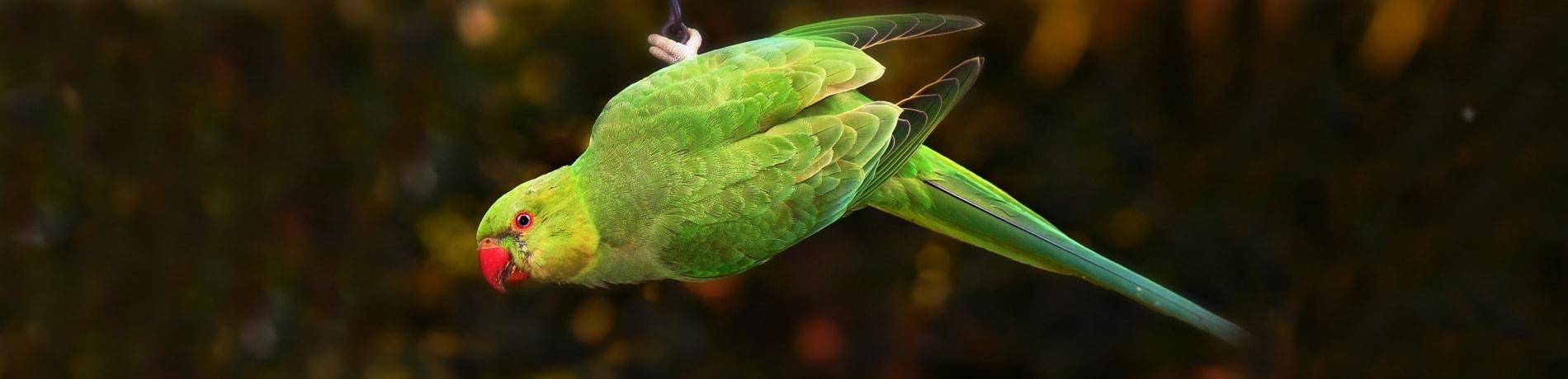 gourmetten met vogel in huis