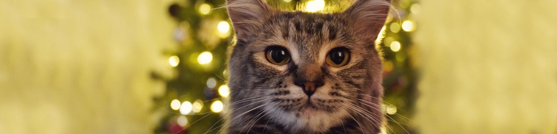 kerstboom tegen katten