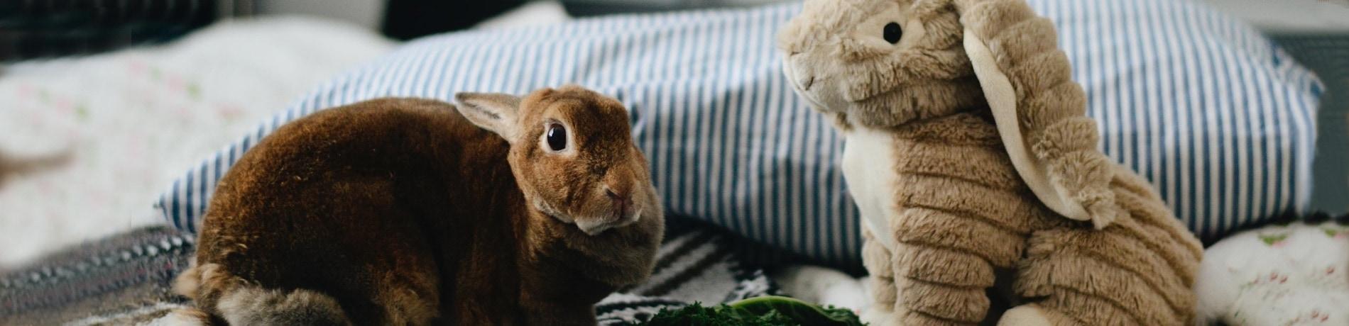 konijnen koppelen