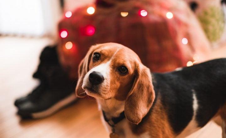 kerstcadeau voor hond