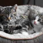 populairste kattennamen