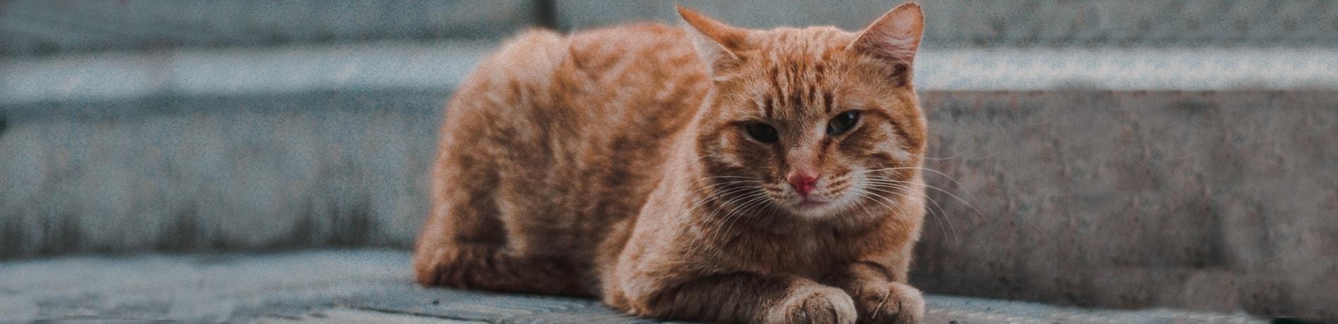 stress bij katten