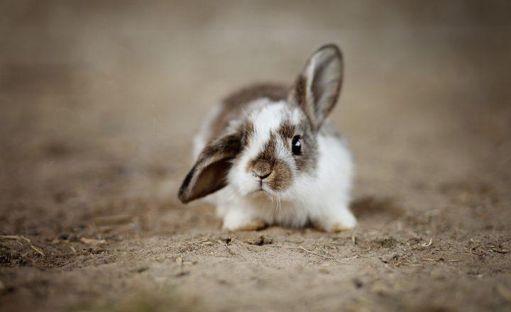 stress bij konijnen