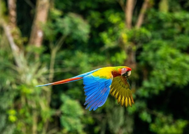 papegaai douche