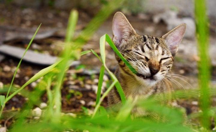 wat mogen katten niet eten