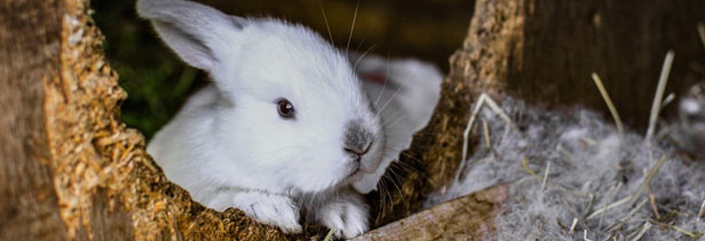 konijnenren maken
